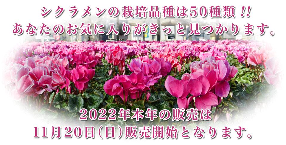 カナイヅカ園芸イメージ