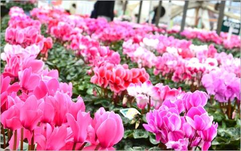 カナイヅカ園芸の風景6