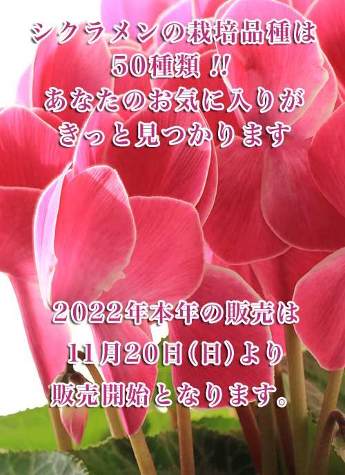 カナイヅカ園芸イメージモバイル