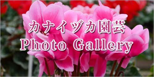 カナイヅカ園芸フォトギャラリーモバイル