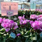 カナイヅカ園芸2017年11月21日の風景
